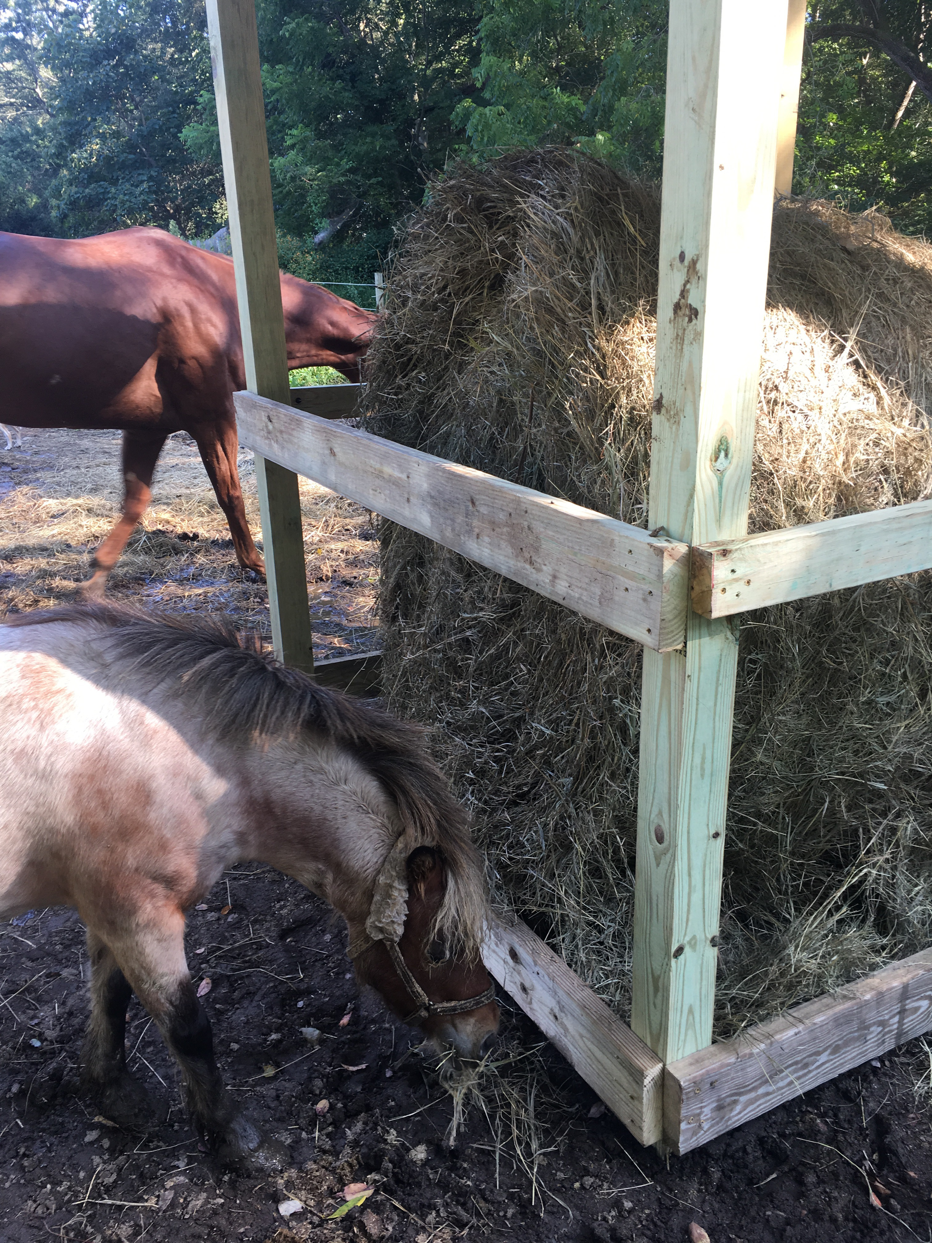 bale htm rivera gates for feeder photo goats ground custom feeders hay round