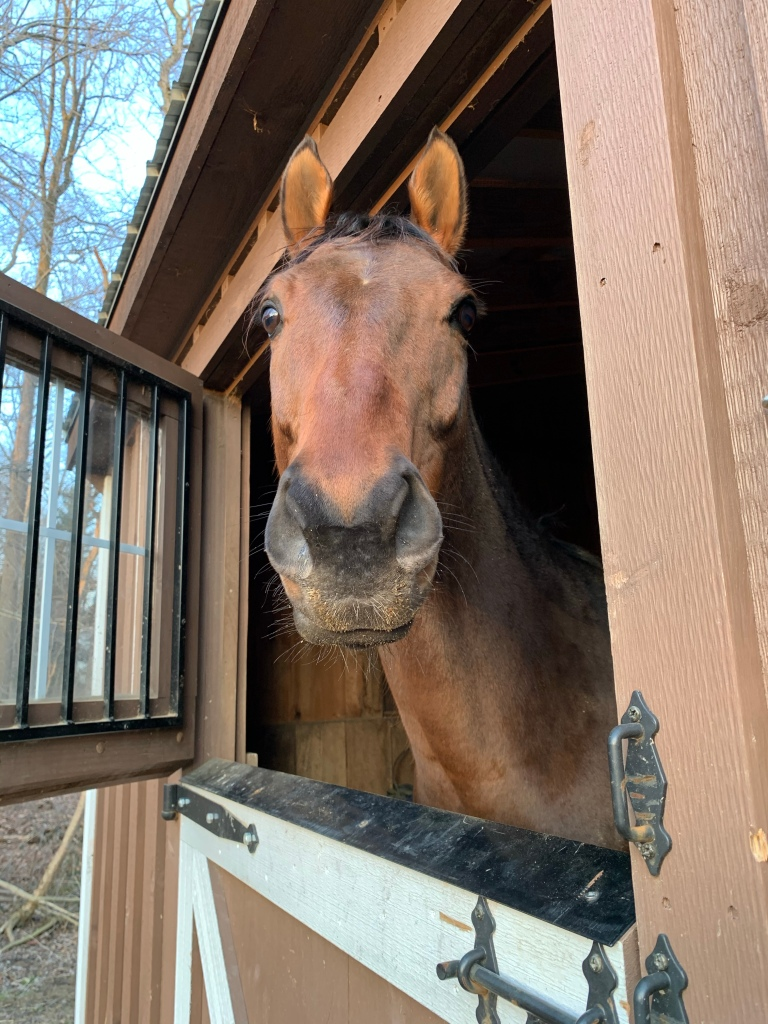 Nay Nay-face looking out his stall door