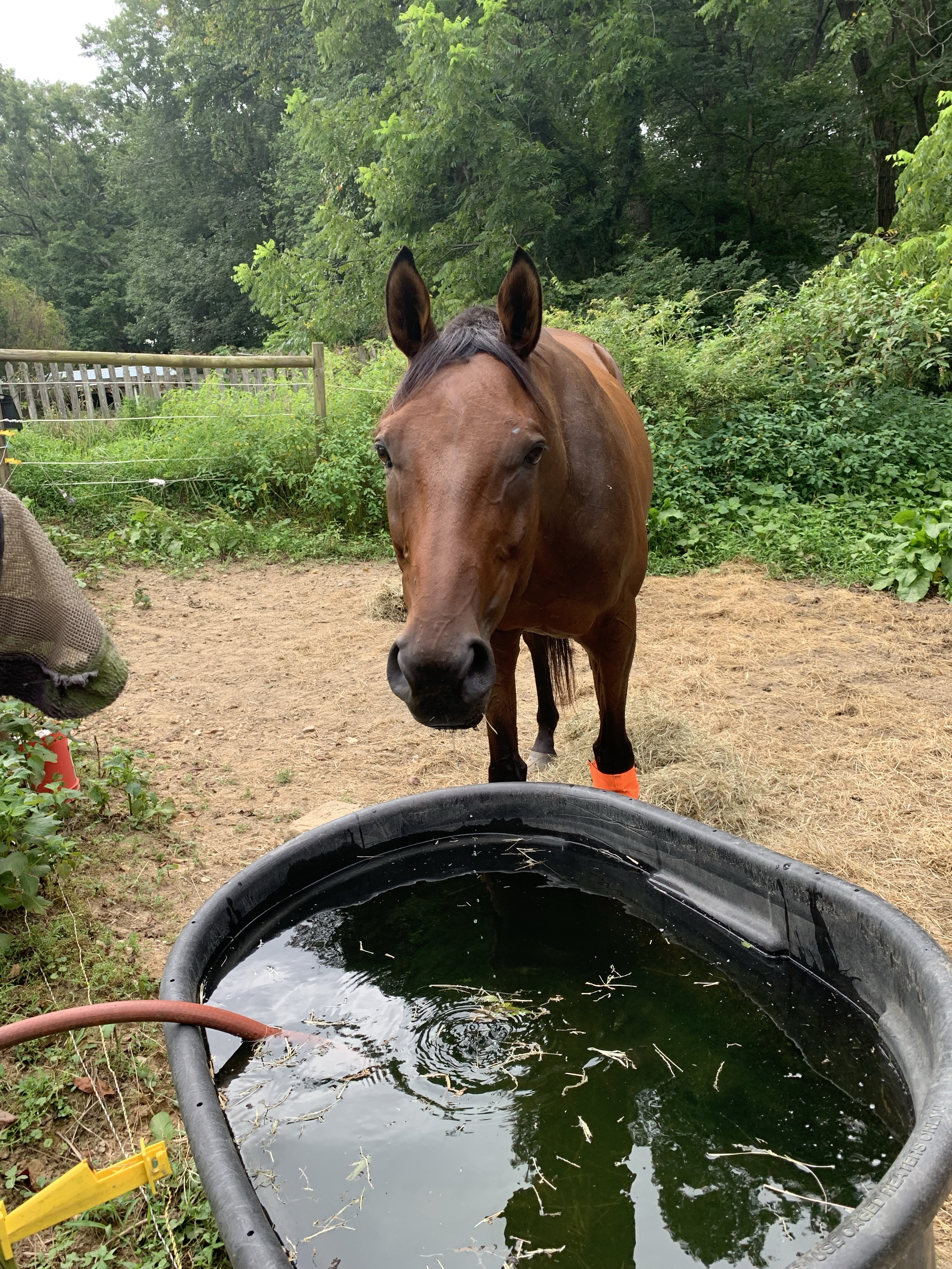 Nay Nay by water trough