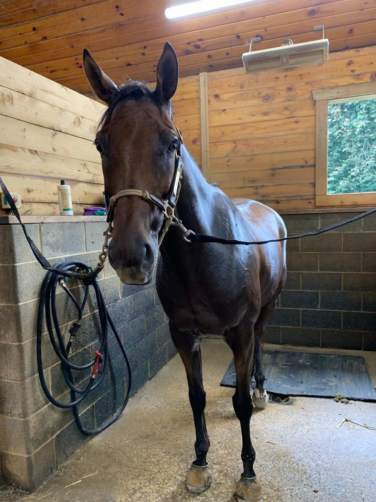 Post-ride sweaty pony