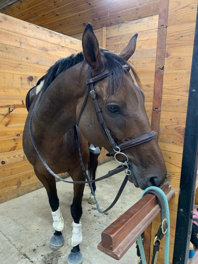 Nay Nay resting his head on a saddle rack